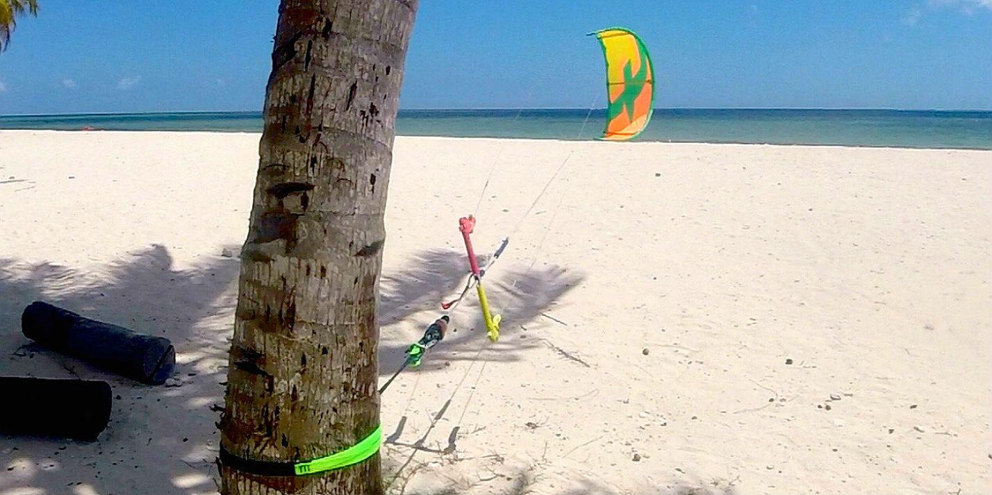 solo-strap-palm-tree